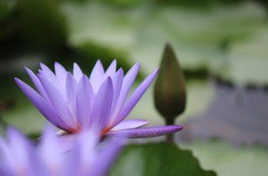 flower-5538547_1920-min